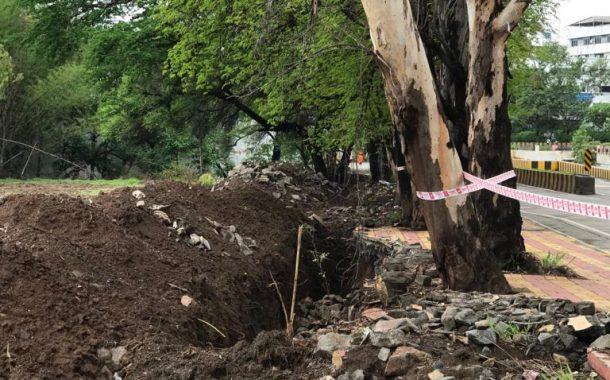 आयुक्त साहेब इकडे लक्ष द्या हो …15 उत्तुंग,विशाल वृक्षांच्या जीवावर उठला , शेतकी विद्यापीठाचा कारभार…