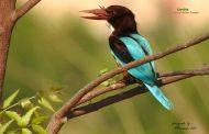 नागझिरा अभयारण्यातील पक्षी आणि निसर्गाची चित्रे मुंबई-पुणे डेक्कन क्वीन एक्सप्रेसवर झळकणार